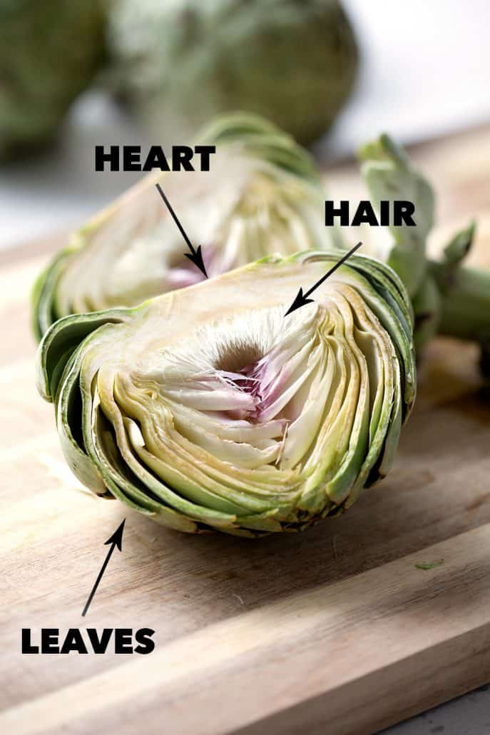 cross section of raw artichoke with labels