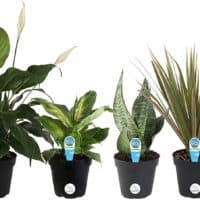 Live House Plant Collection